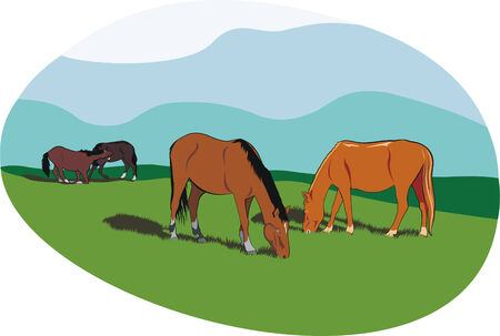 paddock: the art illustration of some horses at nature Illustration