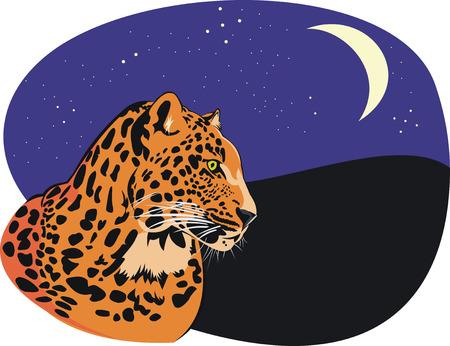 nightly: leopard at nightly background