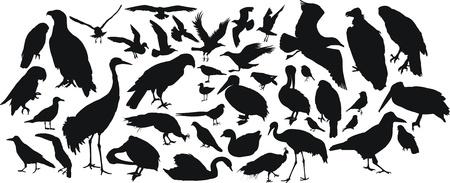 birds silhouettes Stock Vector - 9267130