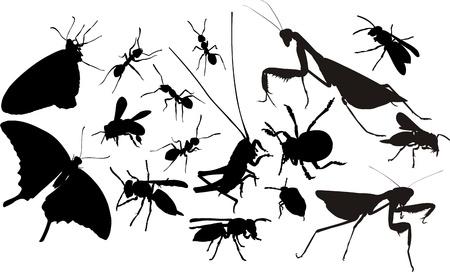 hormiga hoja: insectos siluetas