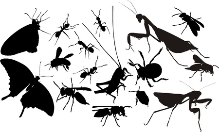 mantis: insects silhouettes Illustration