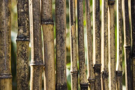 straw twig: close-up part of fence of dried reed