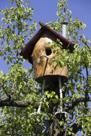 plum tree: handmade wooden bird house at the plum tree