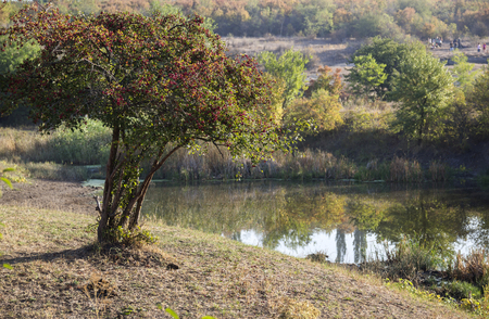 small river: landscape with lonely hawthorn bush and small river
