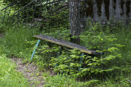 old wooden bench at the forest