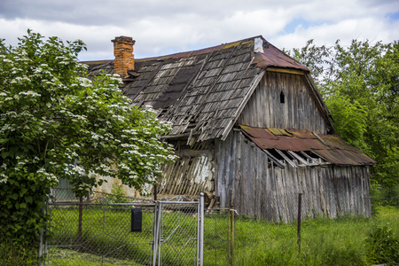 damaged roof: old grey wooden rustic barn and blossomig bush at front