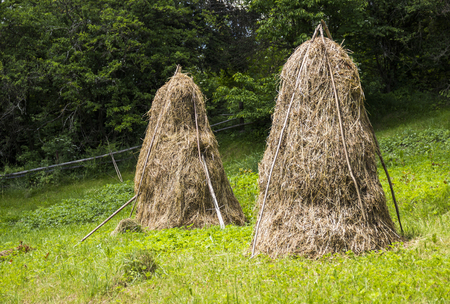 close-up haystacks in the country meadow Stock Photo