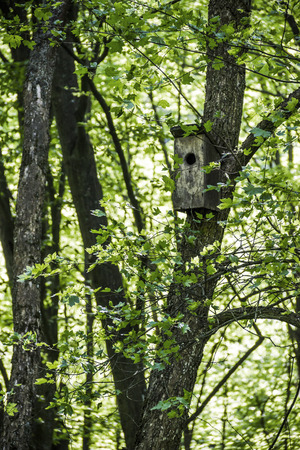 the old wooden bird house at the maple tree in forest