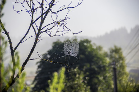 close-up of the spiderweb with drops at the tree