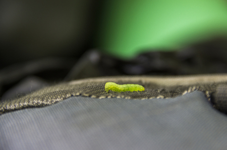 close-up a small green worm caterpillar at the rucksack