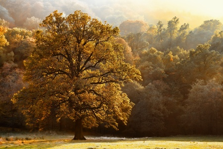 Beautiful tree of colour autumn scenery Stock Photo - 12853885