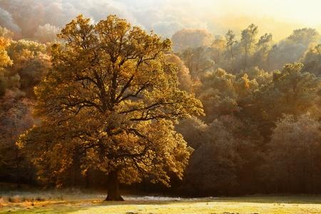 Beautiful tree of colour autumn scenery Stock Photo - 12853885