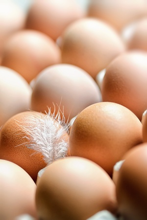 market place: Eggs in a box with a feather in the foreground