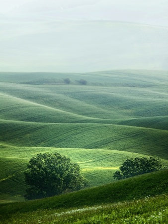 hilly: Rural countryside landscape in Tuscany region of Italy