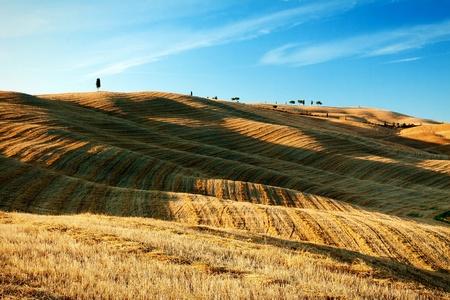 golden stubble evening at the Italian Tuscany