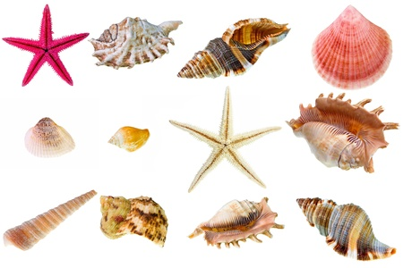 Seashell collection on white background. The high resolution detail photos with clipping path are to be found in my portfolio