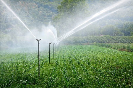 Figure shows how the field is irrigated photo