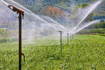 irrigated: Figure shows how the field is irrigated