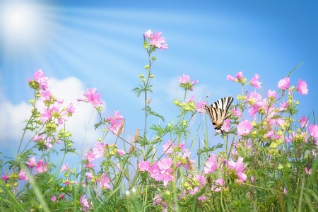 Grass with pink flowers on summer meadow photo