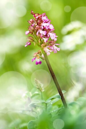 macroshot: Macroshot of small orchid flower - soft focus