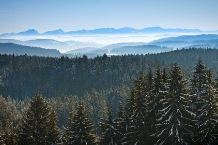 Morning winter calm mountain landscape with coniferous forest photo