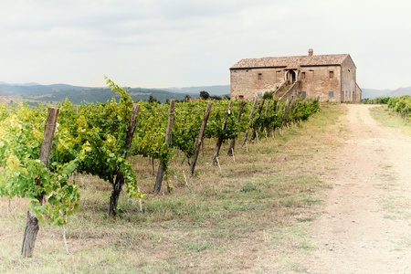 tuscan house: Chianti vineyard landscape in Tuscany, Italy