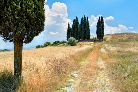 cypress tree: Scenic view of typical Tuscany landscape Stock Photo