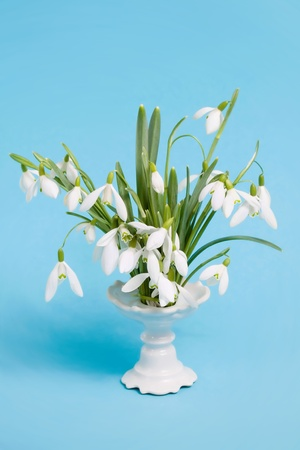 Flower snowdrops in vase on blue background photo