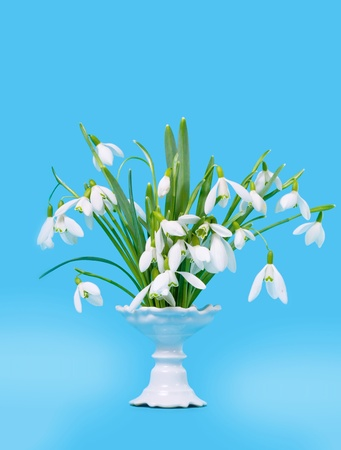 Flower snowdrops in vase on blue background photo