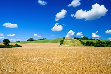 Barley fields with beautiful skies in summer photo