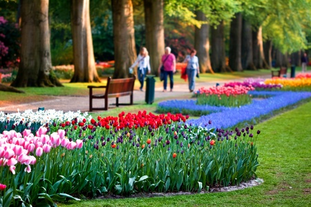 Beautiful garden of colorful flowers in spring - Keukenhof in the Netherlands