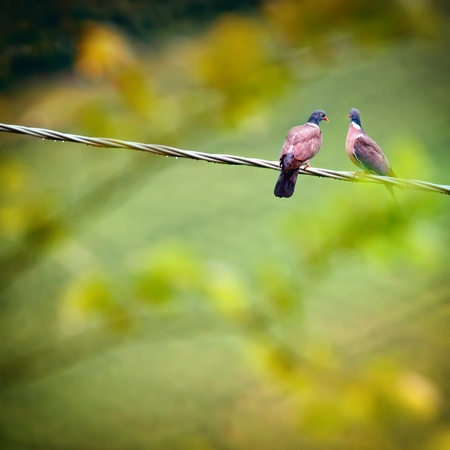 Two pigeons sitting on wire Stock Photo - 13211257