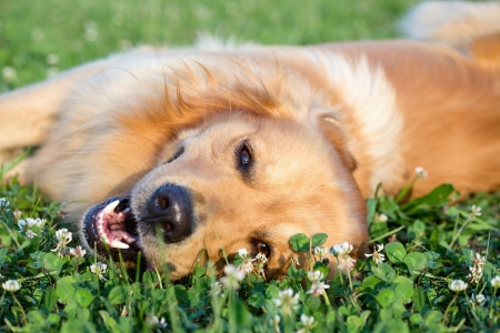 dog health: Portrait young dog playing in the meadow Stock Photo