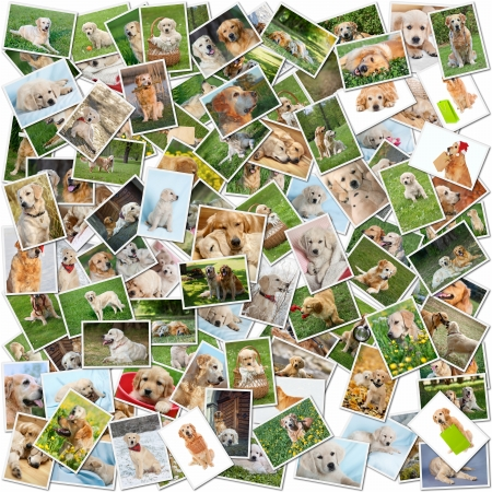 A collage of photos of golden retriever 101 pieces, a collection of photos isolated on a white background, Which can be found in high resolution in my portfolio.
