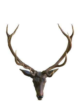 antlers silhouette: Deer head isolated on white background