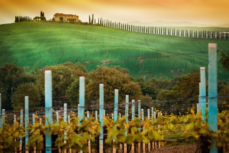 tuscan house: Vineyard landscape in Tuscany, Italy