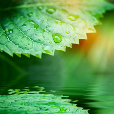 reflex: Green leaves reflecting in the water, shallow focus