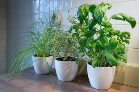 Fresh green herbs in a pot Reklamní fotografie