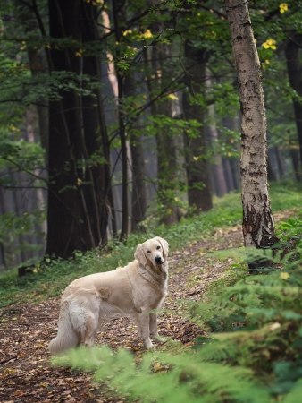 Cute dog in the woods photo