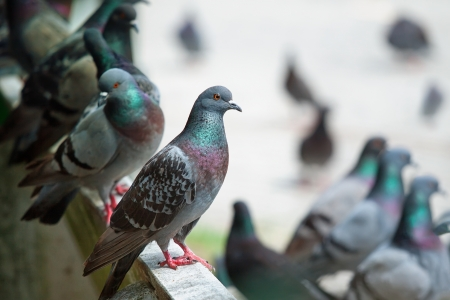 Pigeons sitting on support in park