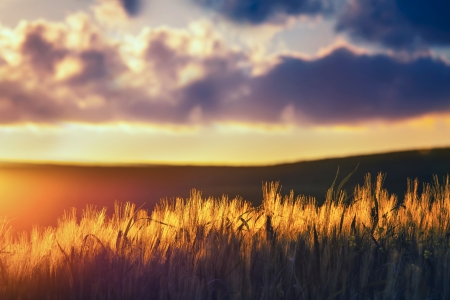 shallow depth of field: Sunset in the open country-focus with shallow depth of field