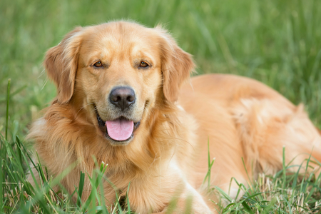 animals together: Portrait young dog playing in the meadow Stock Photo