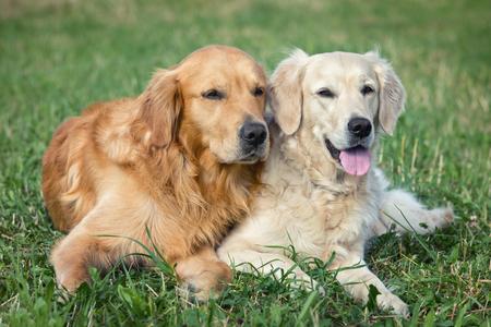 perros jugando: Retrato de dos perros j�venes jugando en el prado Foto de archivo