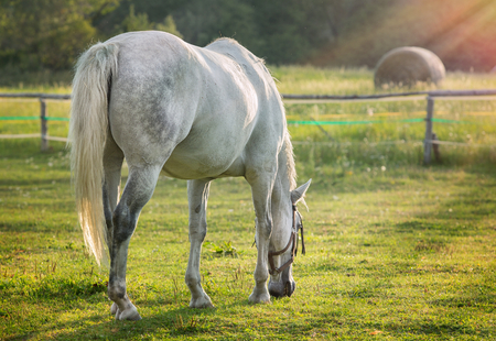 steed: Portrait of a horse grazing in the sun backlighting