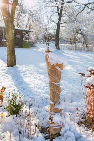 protection of shrubs against wildlife during the winter