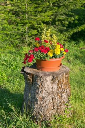 Pot of flowers on a stump Reklamní fotografie