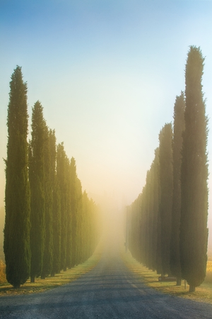 Idyllic Tuscan landscape with cypress alley at sunrise near Pienza, Vall dOrcia Italy, Europe