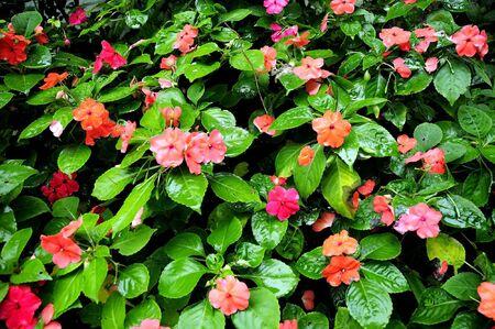 little garden photo