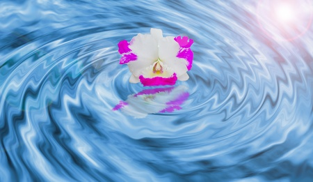 Orchid on the swirling water photo