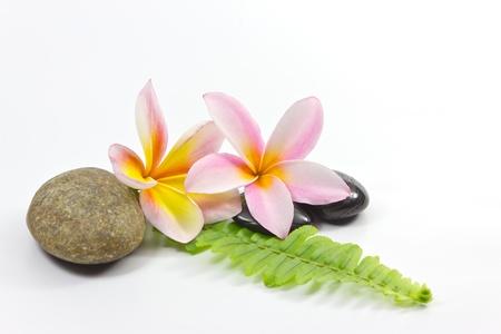 Spa pietre e fiori Frangipani Archivio Fotografico - 11957866
